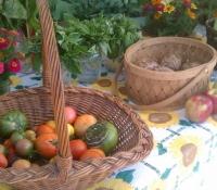 tomatos-and-basil