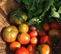 tomatos-and-basil2