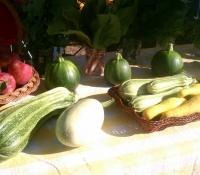 zuchini-squash-apples
